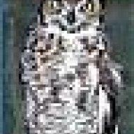 Phil Owl