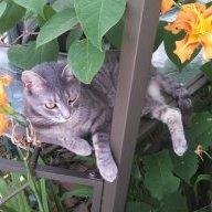 Juniper Ivy